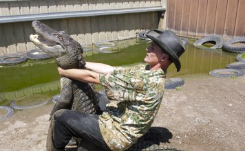 Alligator Wrestler
