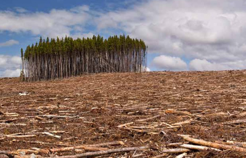 10 Really Scary Deforestation Facts We Should Be Concerned About ...