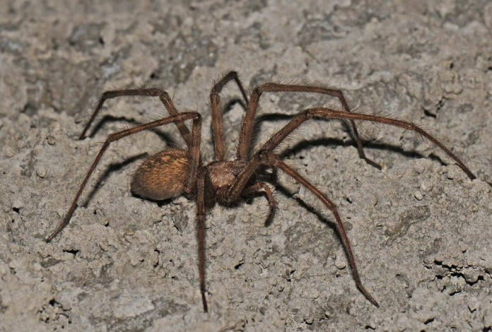 Top 10 Biggest Spiders in the World - PEI Magazine