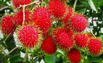 benefits of Rambutan