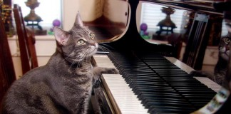 A Piano Made Of Cats
